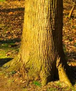 Natural Line - Erle
